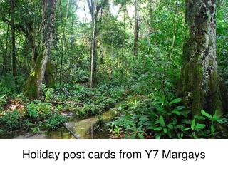 Holiday post cards from Y7 Margays