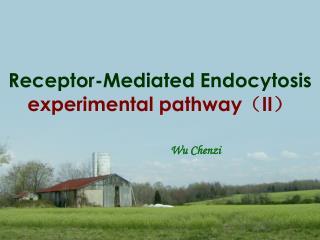 Receptor-Mediated Endocytosis  experimental pathway ( II )