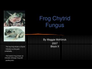 Frog Chytrid Fungus By Maggie McKitrick 2007 Block II