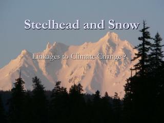 Steelhead and Snow