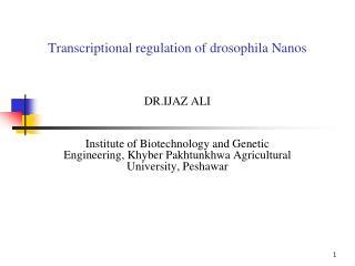 Transcriptional regulation of drosophila Nanos