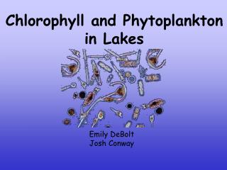 Chlorophyll and Phytoplankton  in Lakes