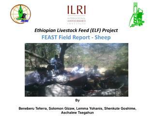 Ethiopian Livestock Feed (ELF) Project  FEAST Field Report - Sheep