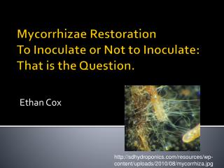 Mycorrhizae Restoration To Inoculate  or Not  to Inoculate:  That is the Question.