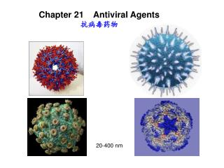 Chapter 21    Antiviral Agents 抗病毒药物