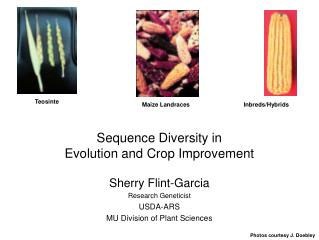 Sequence Diversity in  Evolution and Crop Improvement