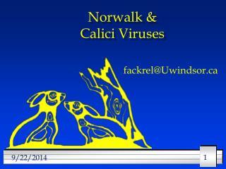 Norwalk & Calici Viruses