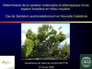 Soutenance de thèse de Lorraine BOTTIN 27 février 2006