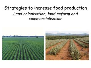 Strategies to increase food production Land colonisation, land reform and commercialisation