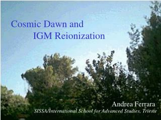 Cosmic Dawn and           IGM Reionization