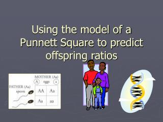 Using the model of a Punnett Square to predict offspring ratios
