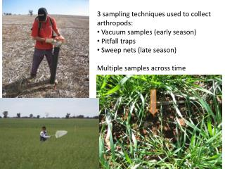3  sampling techniques used to collect arthropods:  Vacuum samples (early season)  Pitfall traps