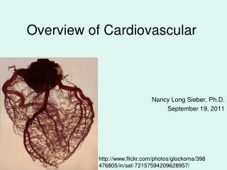 Overview of Cardiovascular