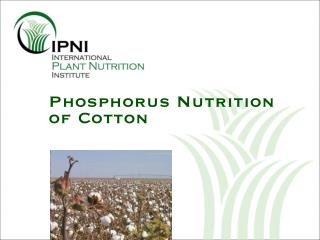 Phosphorus Nutrition of Cotton