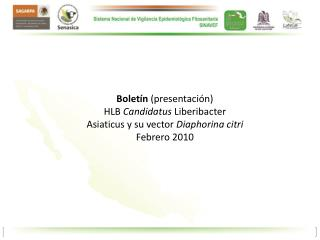 Boletín  (presentación) HLB  Candidatus  Liberibacter Asiaticus y su vector  Diaphorina citri