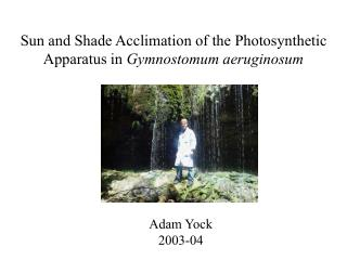 Sun and Shade Acclimation of the Photosynthetic Apparatus in  Gymnostomum aeruginosum