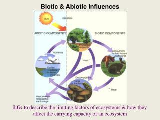 Biotic & Abiotic Influences