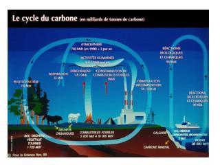Évolution des concentrations de CO 2  et des températures au cours des temps géologiques