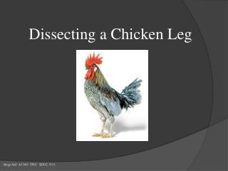 Dissecting a Chicken Leg
