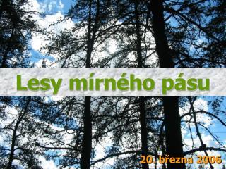 Lesy m�rn�ho p�su