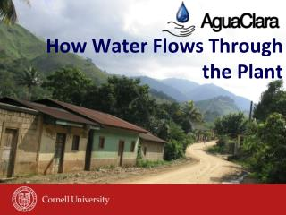 How Water Flows Through the Plant