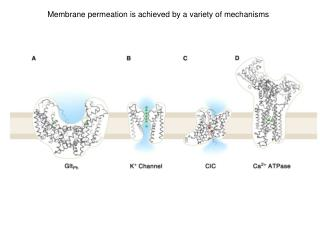 Membrane permeation is achieved by a variety of mechanisms