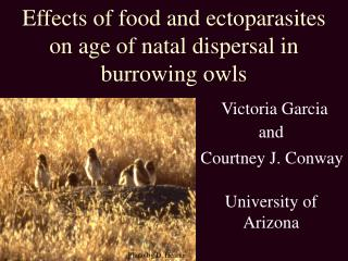 Effects of food and ectoparasites on age of natal dispersal in burrowing owls