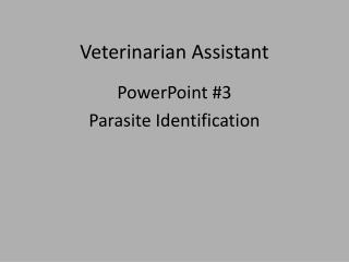 Veterinarian Assistant