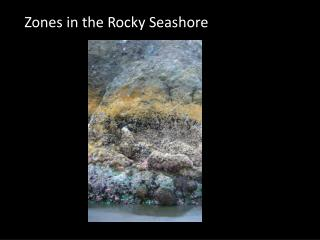 Zones in the Rocky Seashore
