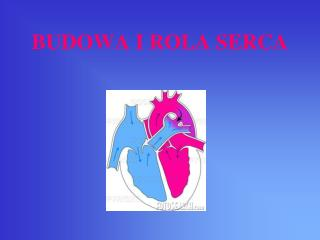 BUDOWA I ROLA SERCA