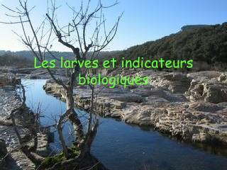 Les larves et indicateurs biologiques