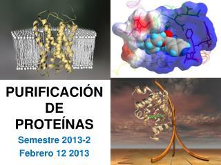 PURIFICACIÓNDE  PROTEÍNAS Semestre 2013-2 Febrero 12 2013