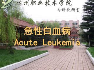 急性白血病  Acute Leukemia