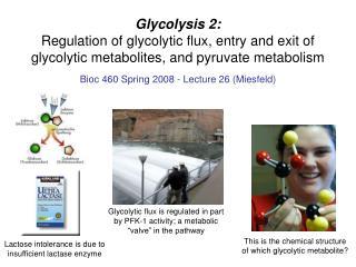 Bioc 460 Spring 2008 - Lecture 26 (Miesfeld)