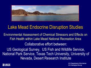 Lake Mead Endocrine Disruption Studies   Environmental Assessment of Chemical Stressors and Effects on Fish Health withi