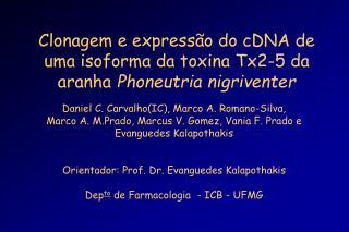 Clonagem e expressão do cDNA de uma isoforma da toxina Tx2-5 da aranha  Phoneutria nigriventer