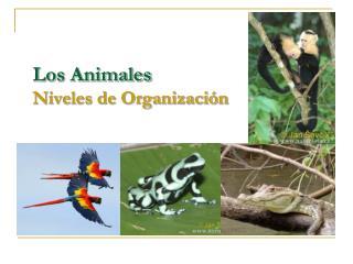 Los Animales  Niveles de Organización