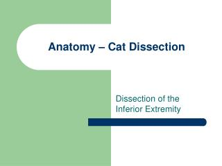 Anatomy � Cat Dissection