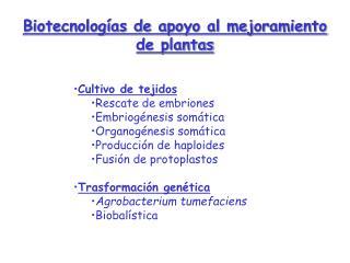 Biotecnolog as de apoyo al mejoramiento de plantas   Cultivo de tejidos Rescate de embriones Embriog nesis som tica Orga