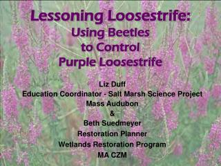 Lessoning Loosestrife: Using Beetles  to Control  Purple Loosestrife
