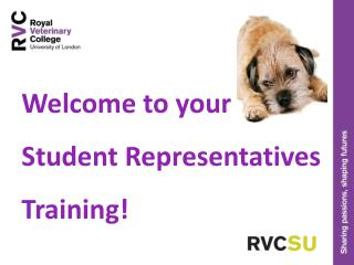 Welcome to your  Student Representatives  Training!