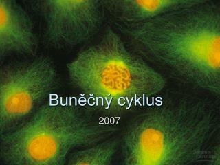 Bunecn  cyklus