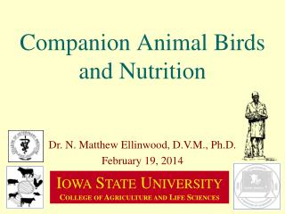 Companion Animal Birds and Nutrition