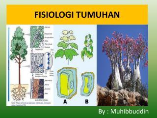 FISIOLOGI TUMUHAN
