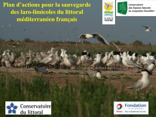 Plan d'actions pour la sauvegarde des laro-limicoles du littoral méditerranéen français