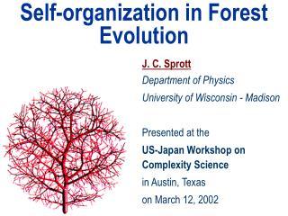Self-organization in Forest Evolution