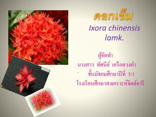 Ixora chinensis lamk.