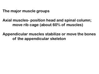 The major muscle groups  Axial muscles- position head and spinal column;  move rib cage about 60 of muscles  Appendicula