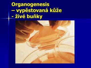 Organogenesis  – vypěstovaná kůže - živé buňky