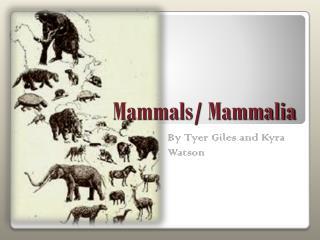 Mammals/ Mammalia